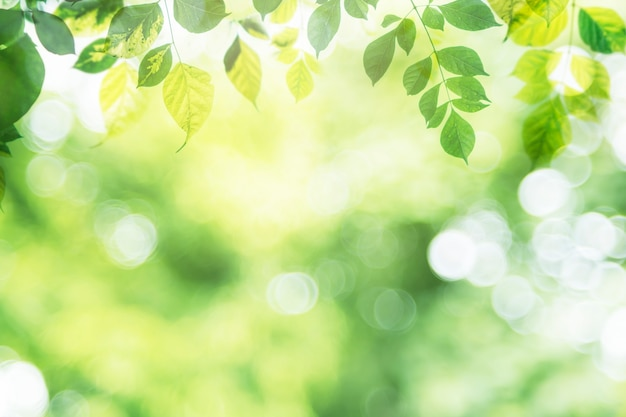 Hoja verde en vegetación borrosa en jardín con espacio de copia.