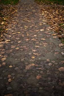 Hojas de abedul caídas en el camino