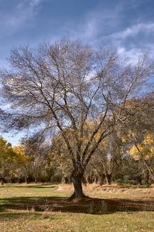 Hojas amarillas caídas al pie de un árbol.