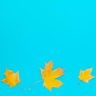 Hojas amarillas de otoño sobre fondo azul