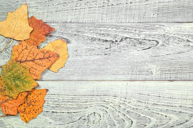Hojas amarillas de otoño sobre un fondo claro de madera vieja