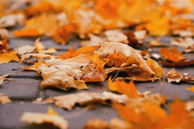 Hojas amarillas de otoño en el suelo en el parque. concepto de otoño