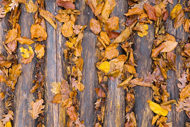 Hojas amarillas de otoño en el suelo