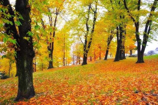 Hojas amarillas y rojas que rodean los árboles en el parque.