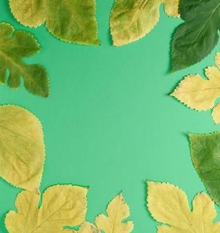 Hojas amarillas y verdes de morera sobre un fondo verde, espacio de copia