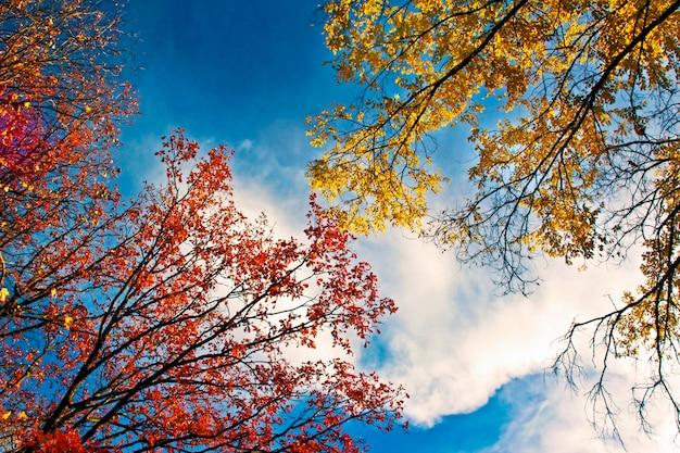 Hojas de los árboles rojos y amarillos contra el cielo