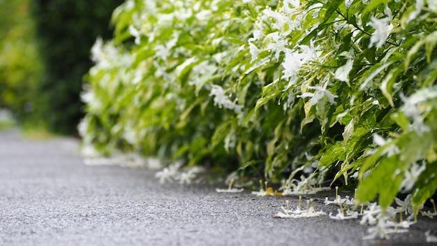 Hojas y árboles en la temporada de lluvias. hay una gota de agua