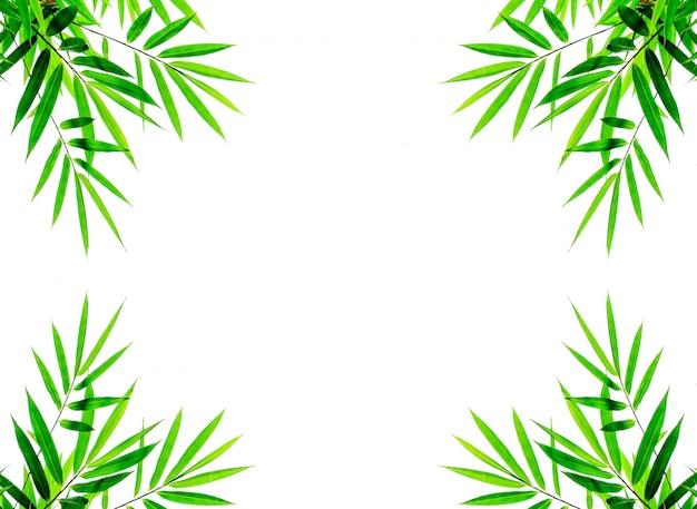 Hojas de bambú verde aisladas sobre fondo blanco