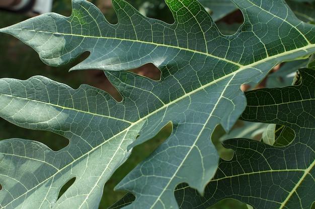Las hojas bellamente estampadas