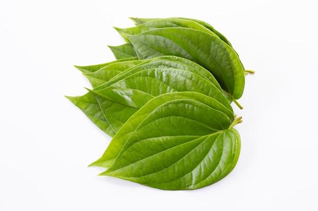 Hojas de betel verde, fresco piper betle en blanco