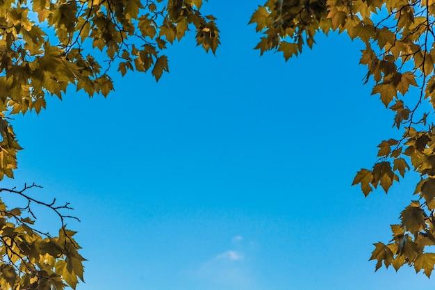 Hojas en el bosque de otoño