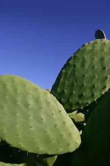 Hojas de cactus y el cielo