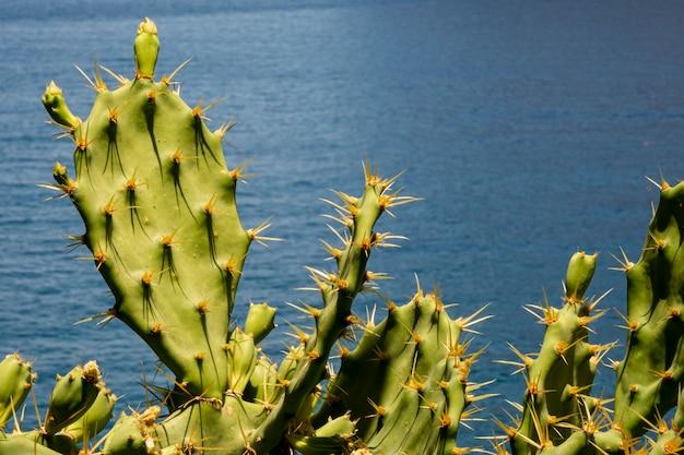 Hojas de cactus puntiagudos con el mar