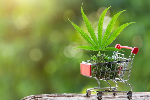 Hojas de cannabis y brotes colocados en un carrito de compras