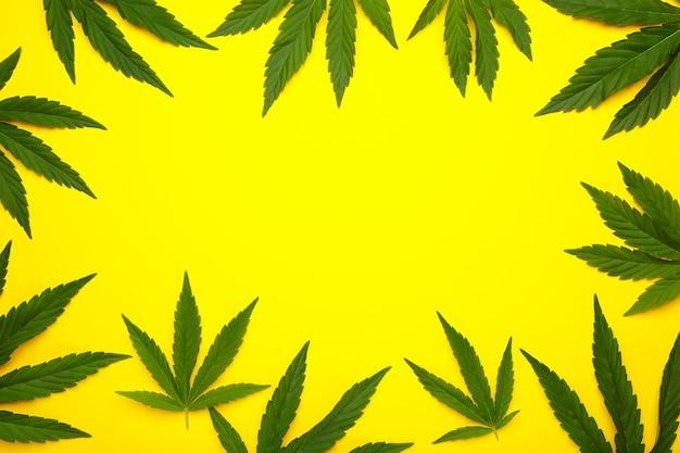 Hojas de cannabis, hojas de marihuana en amarillo con espacio de copia