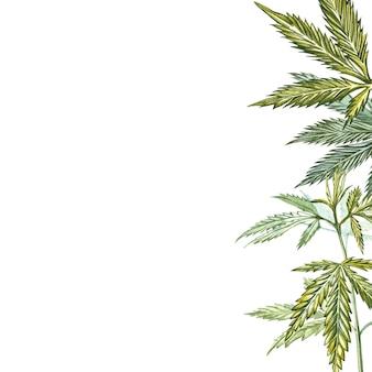 Hojas de cannabis