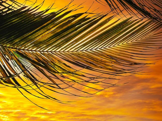 Hojas de un cocotero contra el cielo. playa caribeña. palm island. playa, cielo, trópicos. descanso de verano.