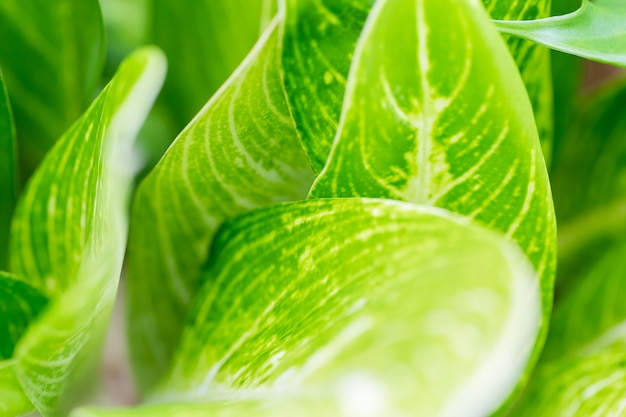 Hojas de color verde en la naturaleza utilizada como fondo, copia espacio.