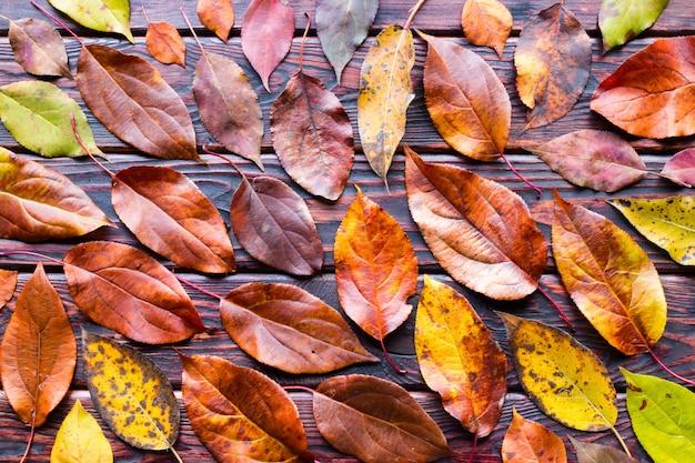 Hojas de colores otoñales sobre fondo de madera