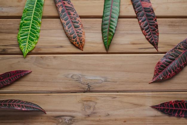 Hojas coloridas colocadas en una escena de madera marrón.