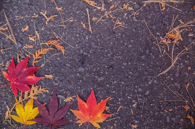 Hojas coloridas en el piso en otoño
