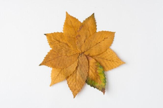Hojas de otoño amarillo formando flor