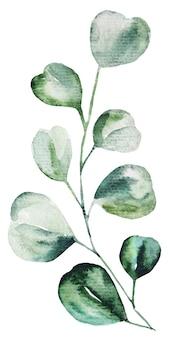 Hojas de eucalipto acuarela set ilustración. elementos de papelería, invitaciones, tarjetas de felicitación, logotipos, patrones, pegatinas