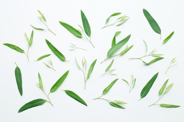 Hojas de eucalipto en blanco