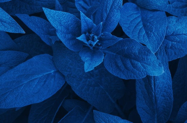 Hojas de fondo. color del año 2020 classic blue.