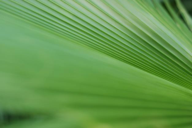 Hojas de fondo de plantas verdes