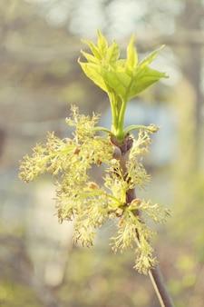 Hojas frescas en una rama en primavera con filtro