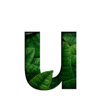 Hojas de fuente hechas de hojas vivas reales con forma de corte de papel precioso.