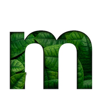 Hojas de fuente m hechas de hojas vivas reales con forma de corte de papel precioso.