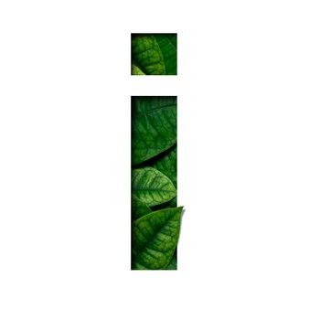 Hojas de fuente que hice de hojas vivas reales con forma de corte de papel precioso.