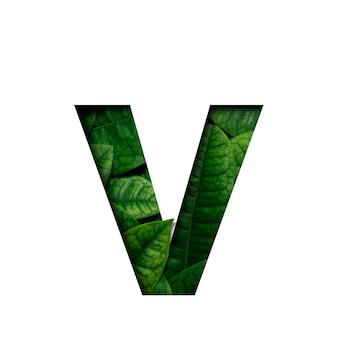 Hojas de fuente v hechas de hojas vivas reales con forma de corte de papel precioso.