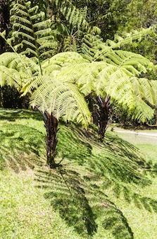 Hojas de helecho gigante con sombras en la jungla