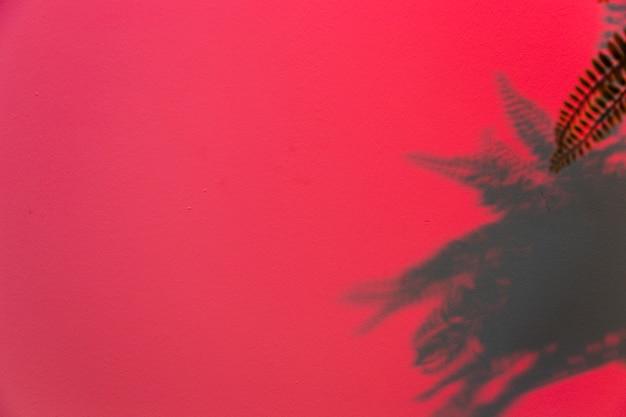 Hojas de helecho sobre fondo rosa