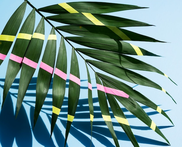 Hojas de helecho tropical pintadas de verde con sombras