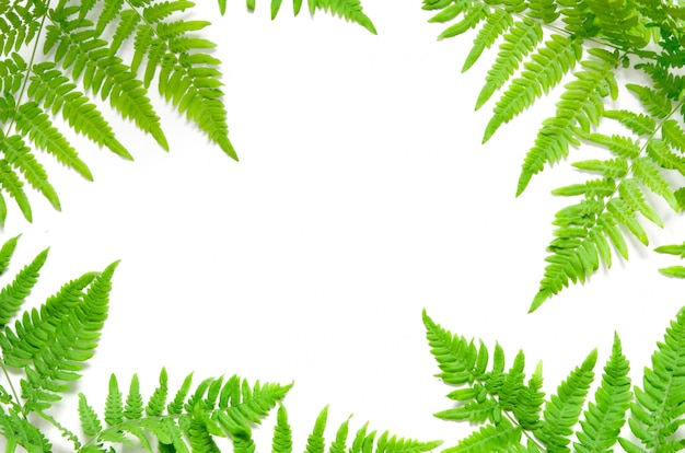 Hojas de helecho tropical verde sobre fondo blanco