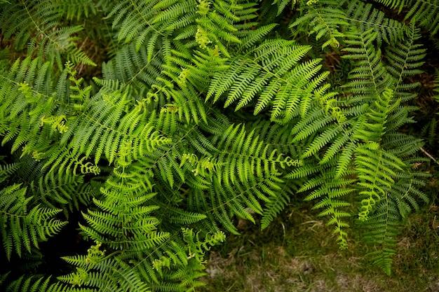 Hojas de helecho verde flora de los pirineos