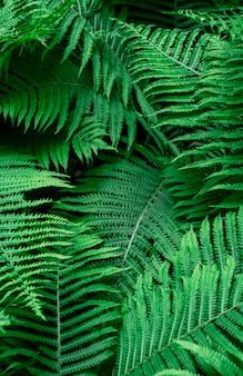Hojas de helecho verde tropical