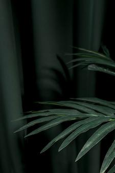 Hojas laterales de palmera.
