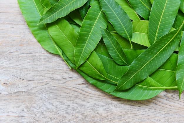 Hojas de mango del árbol en madera, vista superior - textura de hoja de mango verde transparente
