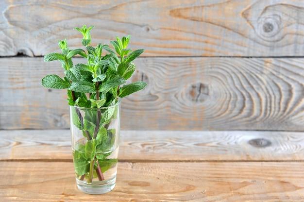 Hojas de menta fresca verde joven en un vaso de vidrio