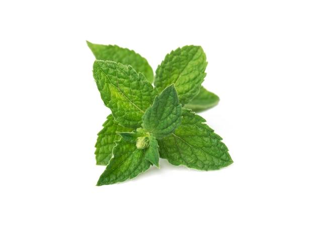 Hojas de menta verde fresca aisladas en blanco