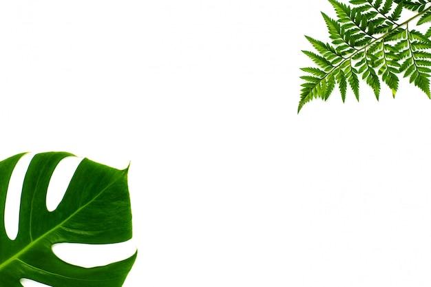 Hojas del miltiple de monstera y hojas del helecho aisladas en el fondo blanco. diseño plano laico