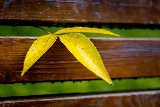 Hojas mojadas amarillas en un banco en el parque