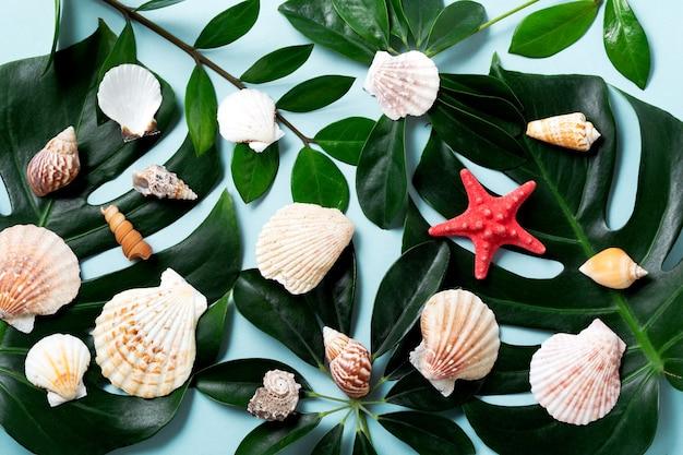 Hojas de monstera y conchas marinas sobre fondo azul. fondo de verano con lugar para texto. fondo de primavera azul. diseño de verano con hojas verdes y conchas marinas.
