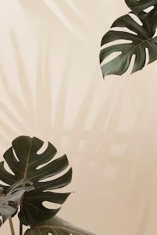 Hojas de monstera tropical con sombra de hojas de palmera