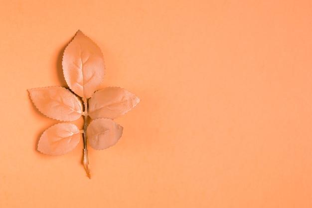 Hojas de naranja sobre fondo naranja con espacio de copia
